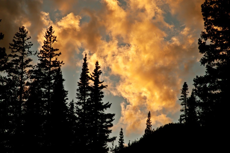 Forest Sunset Clouds