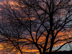 Ballfield Sunset
